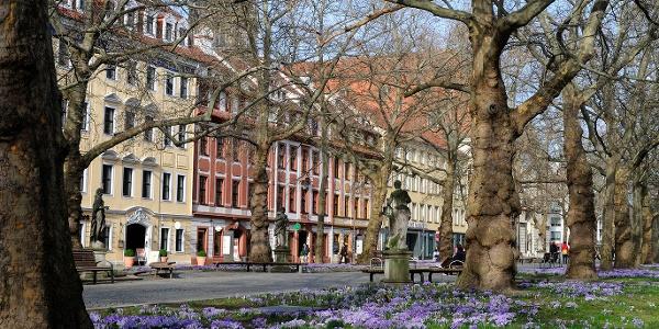Hauptstraße in Dresden mit dem Kügelgenhaus – Museum der Dresdner Romantik
