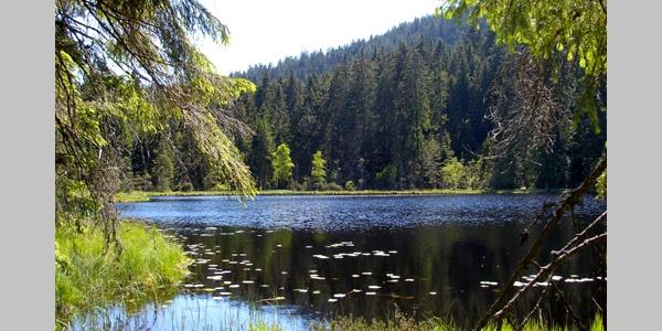 Herrenwieser See