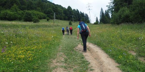 Dedinky / cesta směrem k Zejmarské dolině
