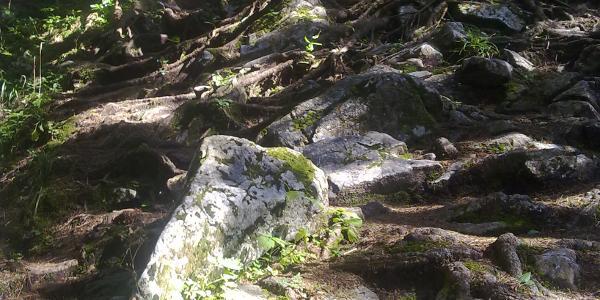 Bergwald am Anstieg auf den Geierstein