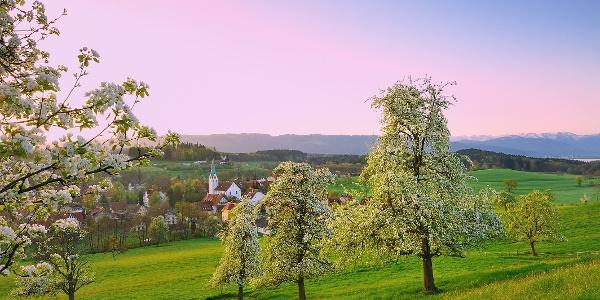 Streuobstwiesen in Oberreitnau