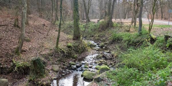 Az Apátkúti-patak vadregényes völgye