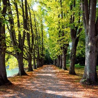 Lindenhofpark im Herbst
