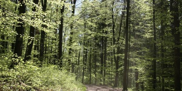 Brenntenwald-2