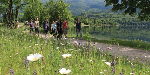 Botanical guidance along Lake Bohinj