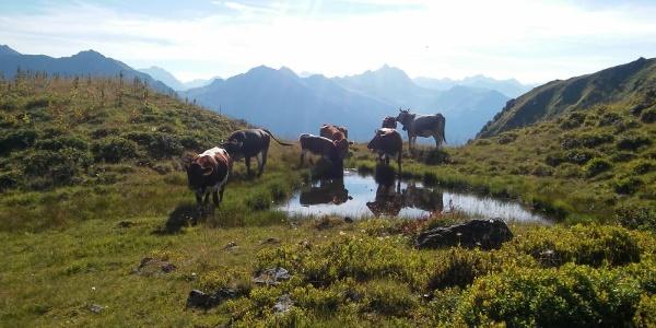Alpe Hora