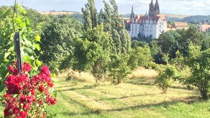 Blick von den Proschwitzer Weinbergen