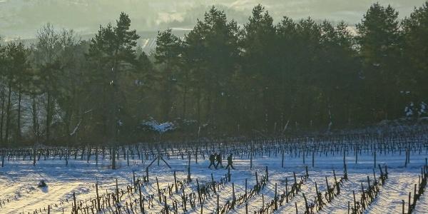 Bartina teljesítménytúra - Szekszárdi szőlők