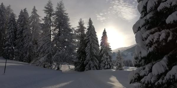 Perfekte Loipen am Mittelberg