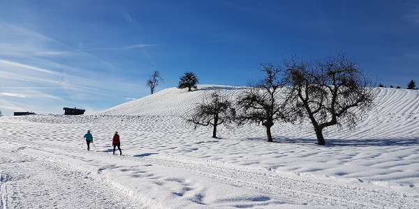 Langlaufen in Alberschwende