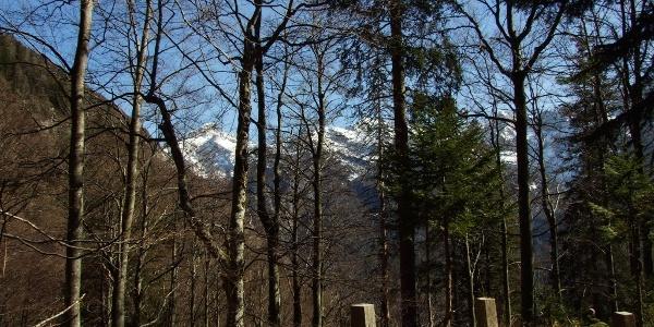Mule trail to Mt. Berebica