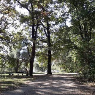 Waldpark in Mannheim
