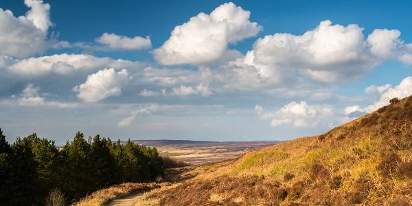 Countryside near Osmotherley