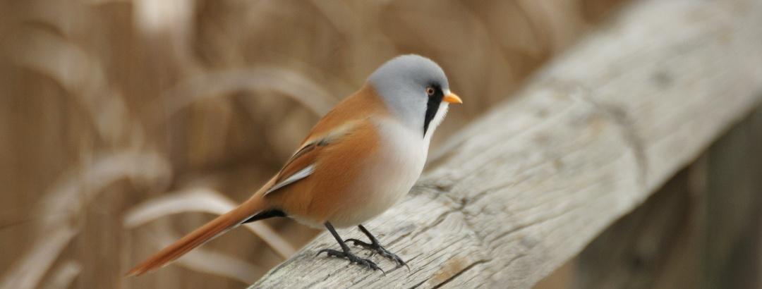 Birdwatching am Bodensee