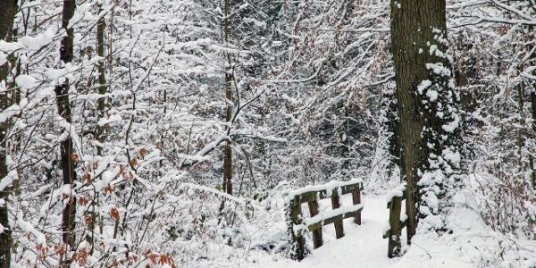 Vom Park sind es wenige Meter bis zum Stadtwald