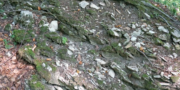 Kalksteinklippe