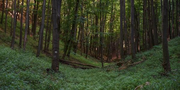 Úton a Kőris-hegy vadregényes lejtőin