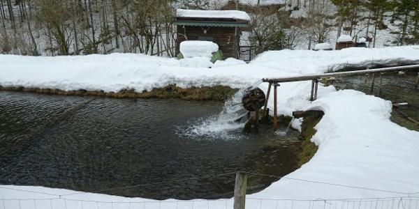 Ein Forellenteich im Graben des Högerbaches