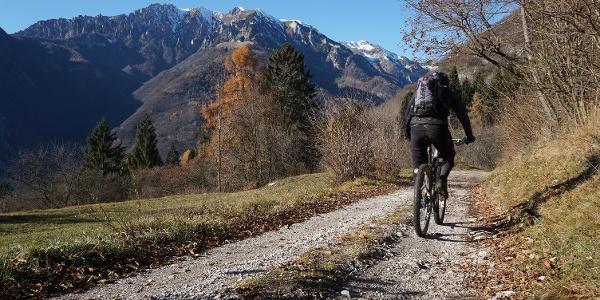 The forest road near Casa Bastiani