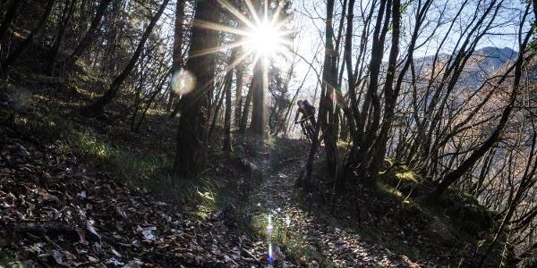 Eine Strecke des Trails Richtung Tennosee