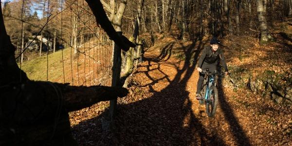 La discesa tra i boschi di Treni in veste invernale