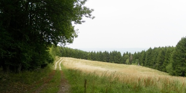 Wald-und Wiesenweg