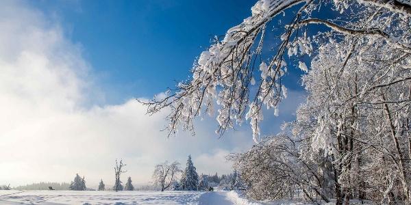 Winterwanderungen um Nordenau im Sauerland