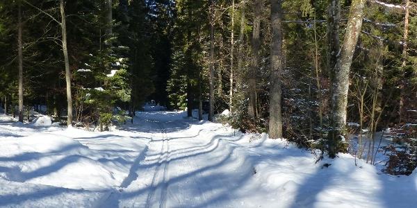 Mitten durch den Winterwald führt die Loipe