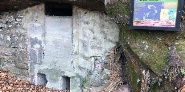Westwallstollen Zufluchtsort für Fledermäuse
