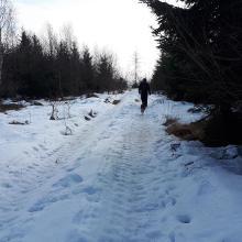 Wegstück zwischen Schwabegg und Markt Wald