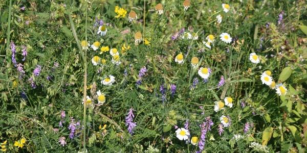 Wiesenblumen entlang der Strecke