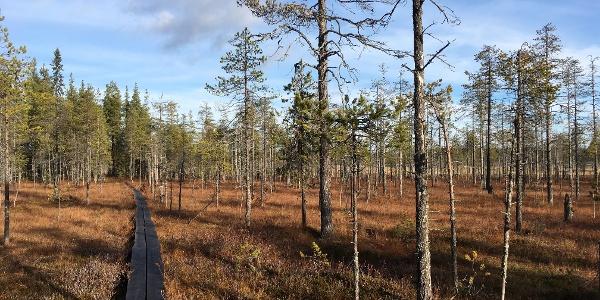 Holzplankenpfad im Herbst