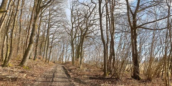 Waldweg entlang der Strecke