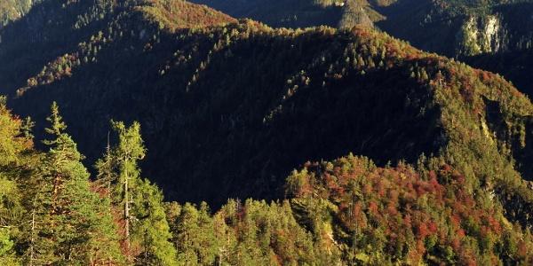Hintergebirge © Nationalpark Kalkalpen / Franz Sieghartsleitner