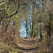 Schöner Weg zwischen Hecken und Bäumen