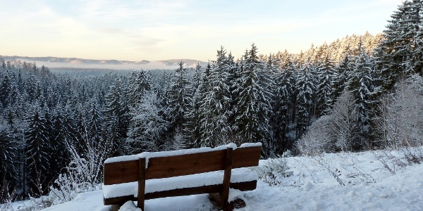 Winterwald bei Sebnitz