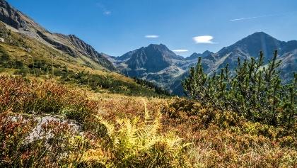Beautiful autumn colours along Planai High Trail