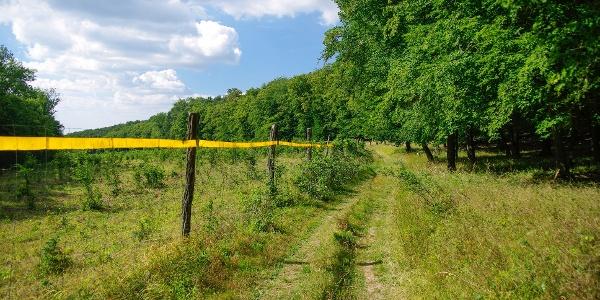 Hangulatos erdőszéli út