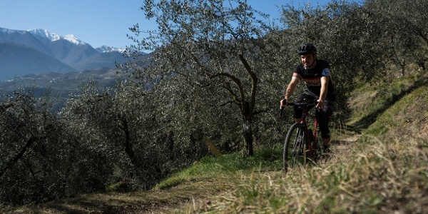 Riding in the olive grove of Arco
