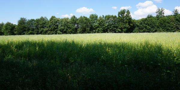 Blumenwiese am Limberg auf der sich im Sommer viele Schmetterlinge tummeln.