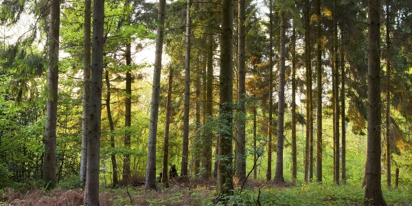 Lineover Wood
