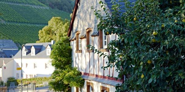 Fachwerkhäuser in Burgen