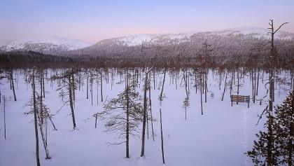 Die Landschaft vom Vogelbeobachtungsturm Tunturiaapa.