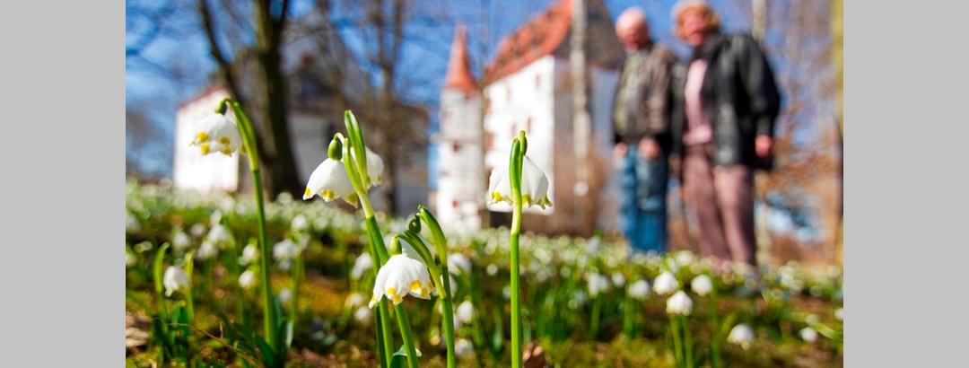Frühlingserwachen am Schloss Schlettau