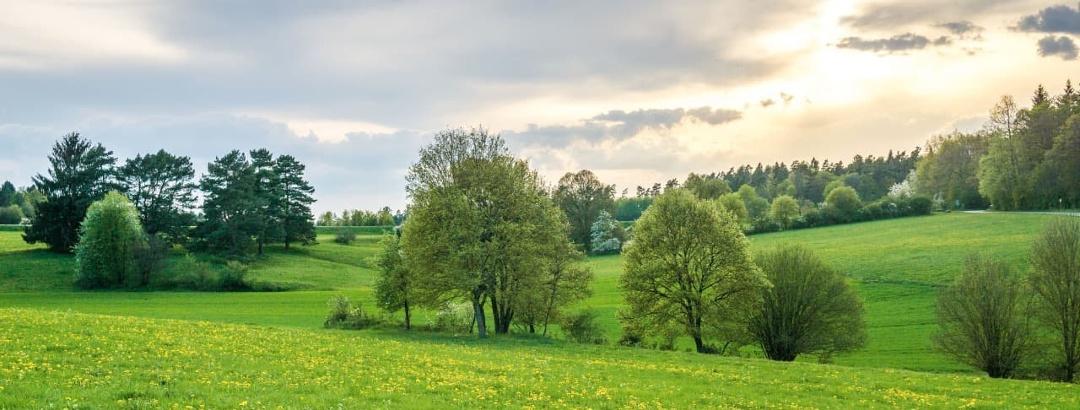 Der Frühling im Nördlichen Schwarzwald färbt die Bäume und Wiesen