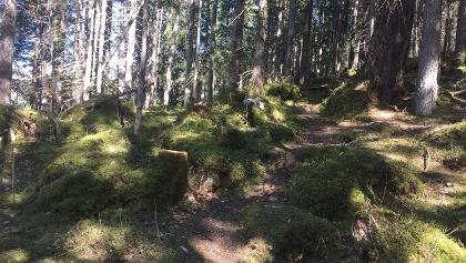 היער הסמוך לאגם אייבזה