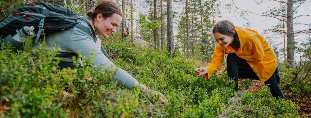 Beeren pflücken in der Region Jyväskylä