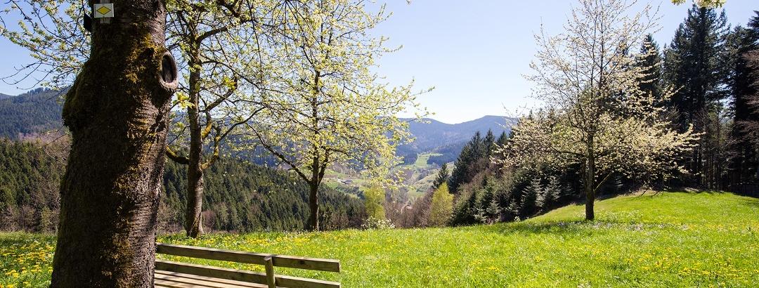 Der Schwarzwaldsteig - immer wieder eröffnet sich ein herrliches Panorama