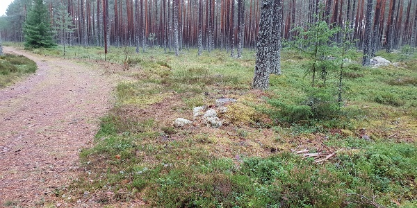 Skogsstig på etappen mellan Sanda och Harg