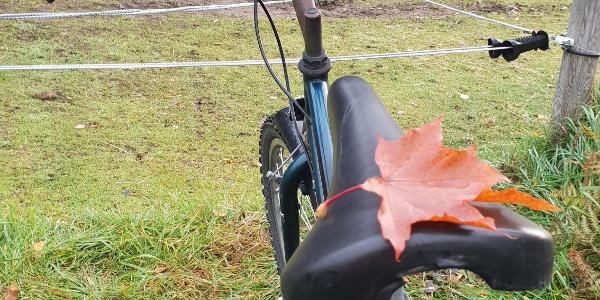 Cykeltur på hösten